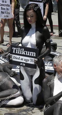 Canadian model and Playboy Playmate Jayde Nicole  who is painted as an orca whale holds a sign with the name of 'Tilikum' ,an orca whale that died in captivity at SeaWorld, as she joined 38 other PETA (People for the Ethical Treatment of Animals) activists who held a die-in to protest the captivity of orca whales at SeaWorld  outside the Los Angeles County Museum of Art in Los Angeles, California, USA, 07 July 2017. 39 half-naked protestors painted as orcas whales and symbolizing the orcas that have died in captivity protested the continued use of orcas at SeaWorld.