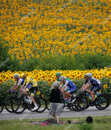 The pack with Belgium's Philippe Gilbert, Britain's Chris Froome, wearing the overall leader's yellow jersey, Germany's Marcel Kittel, wearing the best sprinter's green jersey, Italy's Gianluca Brambilla, Switzerland's Michael Albasini, and France's Cyril Gautier, from left, passes fields of sunflowers during the eleventh stage of the Tour de France cycling race over 203.5 kilometers (126.5 miles) with start in Eymet and finish in Pau, France