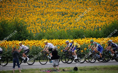 The pack with Vasil Kiryenka of Belarus, Germany's Christian Knees, Belgium's Philippe Gilbert, Britain's Chris Froome, wearing the overall leader's yellow jersey, Germany's Marcel Kittel, wearing the best sprinter's green jersey, Italy's Gianluca Brambilla, Switzerland's Michael Albasini, and France's Cyril Gautier, from left, passes fields of sunflowers during the eleventh stage of the Tour de France cycling race over 203.5 kilometers (126.5 miles) with start in Eymet and finish in Pau, France