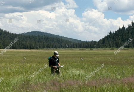 """Elliott Wright, senior associate director of philanthropy for the Nature Conservancy, walks through tall grass in the Lower Carpenter Valley near Truckee, Calif. The wild Sierra Nevada meadow hidden from public view for more than a century is opening for tours after it was purchased by conservation groups. Officials with the Nature Conservancy and Truckee Donner Land Trust call it a """"secret garden"""