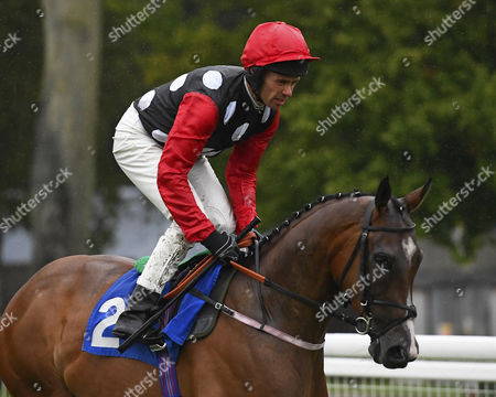 Captain Ryan ridden by Timmy Murphy goes down to the start  of The George Smith Horseboxes Handicap,    during Evening Racing at Salisbury Racecourse on 29th July 2017