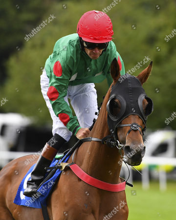Edge ridden by Timmy Murphy goes down to the start of the Dartmouth General Contractors Ltd Handicap (Div 1),  during Afternoon Racing at Salisbury Racecourse on 7th August 2017