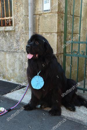 Editorial image of Dog Loyalty Award, Camogli, Italy - 16 Aug 2017