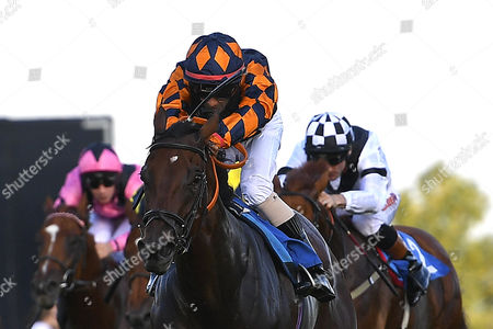 Winner of The Bathwick Tyres Novice Auction Stakes (Plus 10) Bambino Lola ridden by Royston Ffrench and trained by Adam West  during Evening Racing at Salisbury Racecourse on 25th August 2017