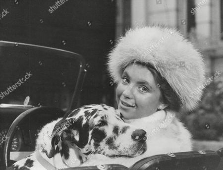 Actress Judi Bowker During Filming Of 'little Mrs Perkins'. With Harlequin Great Dane 'misty'. Box 721 30612163 A.jpg.