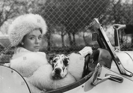 Actress Judi Bowker During Filming Of 'little Mrs Perkins'. With Harlequin Great Dane 'misty'. Box 721 306121650 A.jpg.