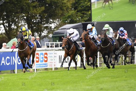 Winner of The Irish Yearling Sales Nursery  Stakes Move to the Front ridden by Adam Kelly and trained by Clive Cox   during Afternoon Racing at Salisbury Racecourse on 7th September 2017