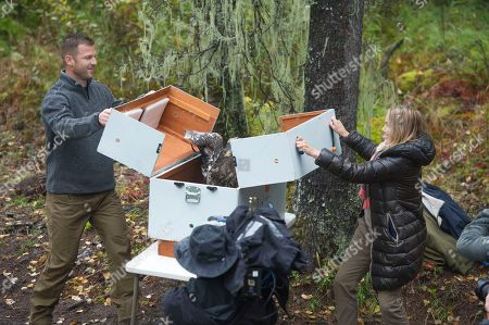 """Stock Picture of Animal Planet's Dave Salmoni and Princess Cruises Vice President of Alaska Product Management Lisa Syme release a rehabilitated bald eagle during the ribbon cutting ceremony of Animal Planet's """"Treehouse Masters"""" Mt. McKinley Princess Wilderness Lodge treehouse on"""