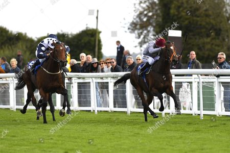 Mr Top Hat left ridden by Jim Crowley and trained by David Evans chases down Algam ridden by Sean Levy to win The Bathwick Tyres Conditions Stakes during Afternoon Racing at Salisbury Racecourse on 4th October 2017