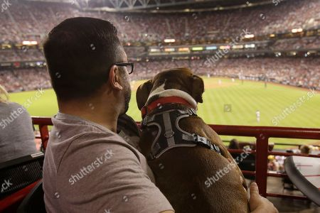 Gordo, an eight-year-old Pit Bull mix, and his pet parent, Jason Solarez, watches the Arizona Diamondbacks in the National League Wild Card game against the Colorado Rockies at Chase Field, in Phoenix