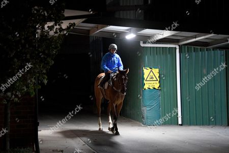 Jockey Damien Oliver riding Egg Tart, returns to the stables after a gallop trackwork at Caulfield Racecourse in Melbourne, Victoria, Australia, 10 October 2017.