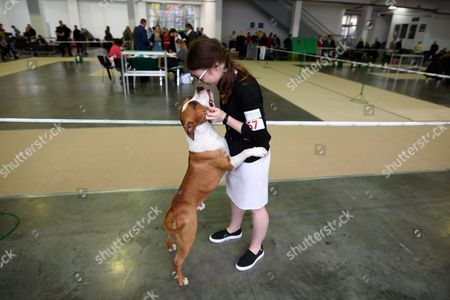 A Pit Bull Terrier with his owner during the International Dog Show in Poznan, 22 October 2017. About 5,000 and more than 260 breeds of dogs competed for the title of the best representatives of their category.