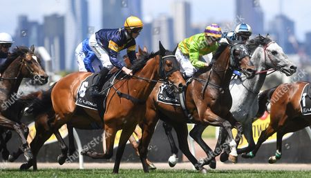 Stock Photo of Stephen Baster rides the Gai Waterhouse trained Cismontane (C-R) to victory in the Lexus Stakes on Derby Day at Flemington Racecourse in Melbourne, Australia, 04 November 2017.