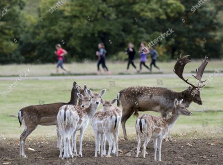 Harry Mount Joins A Group Of Enthusiasts On A 'deer At Dawn' Walk At Knole House In Kent To Observe The Deer During The Rutting Season. 19/10/2016.