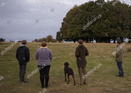 Stock Image of Harry Mount Joins A Group Of Enthusiasts On A 'deer At Dawn' Walk At Knole House In Kent To Observe The Deer During The Rutting Season. 19/10/2016.