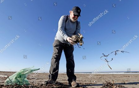 Mike Patton picks-up and removes debris from a dead bird as part of a citizen patrol surveying dead birds that wash ashore on beaches along the U.S. West Coast, in Ocean Shores, Wash. The multi-state monitoring program help tells a larger story about coastal environments, seabird deaths and health