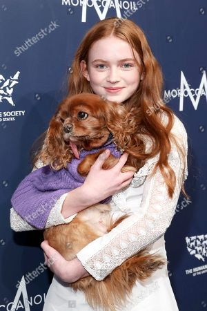 Sadie Sink, Toast. Sadie Sink, holds Toast (@toastmeetsworld) on the red carpet at The Humane Society of the United States To the Rescue! New York Gala: Saving Animal Lives on in New York City. To the Rescue! is a benefit in celebration of the life-saving work of its animal rescue efforts across the nation and around the world. In its eighth year, the event honored Rob Thomas and Marisol Maldonado and their Sidewalk Angels Foundation, and Moroccanoil. The evening featured a performance by Rob Thomas