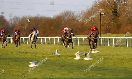 French Crusader and Alan Doyle win the 1stsecuritysolutions.co.uk Maiden National Hunt Flat Race at Huntingdon as the seagulls decend the track in the final furlong.