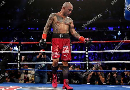 Miguel Cotto, Sadam Ali. Miguel Cotto, of Puerto Rico, looks at his arm after the 12th round against Sadam Ali in a WBO junior middleweight title boxing match, early, in New York