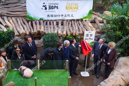 Brigitte Macron (R), wife of French president Emmanuel Macron, Zhang Yesui (3-R), Chinese executive vice foreign minister, flanked by French and Chinese officials, pose near the newborn baby panda 'Yuan Meng' during his naming ceremony at the Beauval zoo in Saint-Aignan-sur-Cher, central France, 04 December 2017.  As 'first lady', Mrs. Macron shares godmother duties with the wife of the Chinese president.