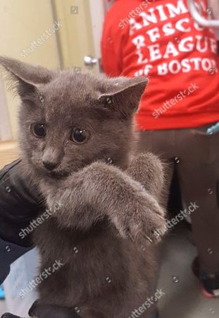 This image provided by the Massachusetts State Police shows a kitten was spotted walking along the side of the road as cars drive by in the Ted Williams Tunnel in Boston, and was rescued by state police troopers who shut down traffic for it. The Animal Rescue League of Boston quickly rescued the kitten. Police say they need ideas on what to name the kitten. The kitten will be put up for adoption when it's medically cleared