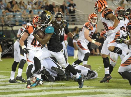Jacksonville Jaguars running back Denard Robinson (16) runs through the Cincinnati Bengals defense to score on a 2-point conversion play during the second half half of an NFL preseason football game in Jacksonville, Fla