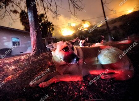 Mary Gletis' dogs are worried about the fires