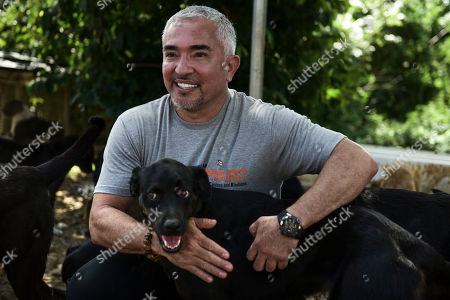 """Dog trainer Cesar Millan known for his TV show """"Dog Whisperer,"""" pets a rescued dog at Canita Sanctuary, where abandoned cats and dogs are protected from being euthanized, in Guayama, Puerto Rico. """"(The rescuers) need more help as time passes by because everybody forgets,"""" he said, noting that animals are not the government's priority. """"We have to keep it in the minds of people, in the hearts of people. There's a long way to go"""