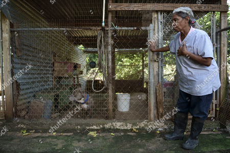 Carmen Cintron, founder of Canita Sanctuary, stands outside a pen housing a pit bull at her shelter where she protects hundreds of cats and dogs from being euthanized, in Guayama, Puerto Rico. The shelter, which suffered some damage by the whip of Hurricane Maria almost three months ago, currently houses 752 animals: 12 cats and 740 dogs