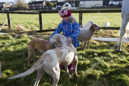 Stock Photo of 6 year old Sydney Tayor meets the hounds The Vine and Craven Boxing day meet in Lambourn,Berkshire.