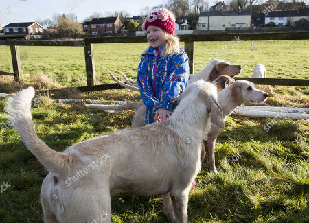 6 year old Sydney Tayor meets the hounds The Vine and Craven Boxing day meet in Lambourn,Berkshire.