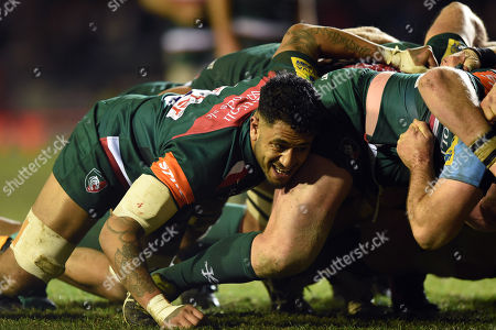 Stock Image of Valentino Mapapalangi of Leicester Tigers in action at a scrum