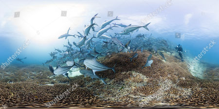 Stock Image of Chasing Coral (2017)