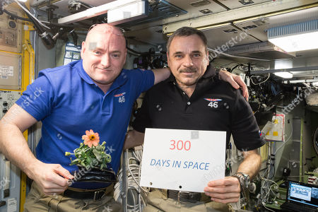 Scott Kelly, Mikhail Kornienko. Made available by NASA, one-year mission crew members Scott Kelly of NASA, left, and Mikhail Kornienko of Roscosmos celebrate their 300th consecutive day in space. By spending 340 days aboard the International Space Station, the astronauts will help scientists understand what happens to the human body while in microgravity for extreme lengths of time. Kelly is holding a zinnia plant grown in space as part of the Veggie experiment on the International Space Station