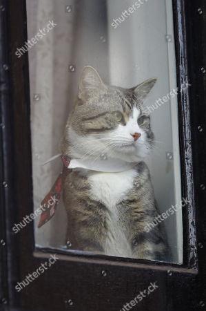 Wikileaks founder Julian Assange's cat James at the window of Ecuadorian embassy in London