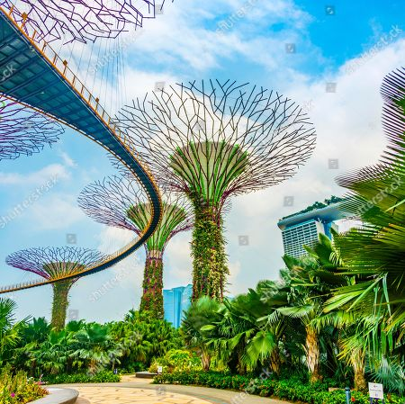 Stock Photo of Supertree Grove with skyway in the Gardens by the Bay futuristic municipal park, designed by Wilkinson Eyre Architects, and Marina Bay Sands Hotel, designed by architect Moshe Safdie, Marina Bay, Downtown Core, Singapore