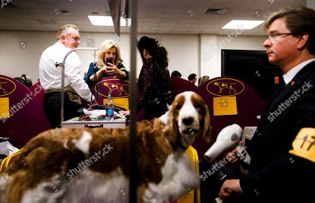 Handlers and groomers gather backstage as a Welsh Springer Spaniel named 'Samba' is groomed by Doug Johnson (R) of Bloomington, Indiana during the 2018 Westminster Kennel Club Dog Show at Madison Square Garden in New York, New York, USA, 13 February 2018. The annual competition features hundreds of dogs from around the country.
