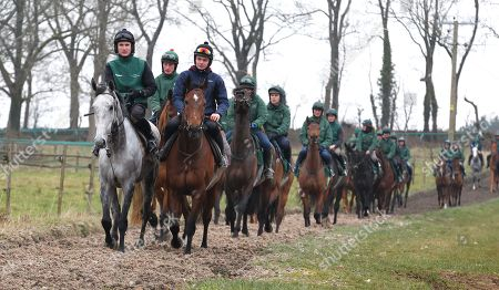 . Cheltenham Press Day at Grange Hill Farm. Nigel Twiston-Davies. Bristol de Mai ( l) and The New One (r) lead out the horses onto the gallops.