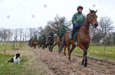 . Cheltenham Press Day Grange Hill Farm. Nigel Twiston-Davies. Ballyoptic on the gallops.