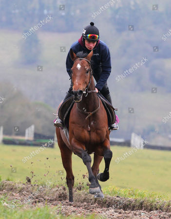 . Cheltenham Press Day. Grange Hill Farm. Nigel Twiston-Davies The New One and Willie Twiston-Davies on the gallops