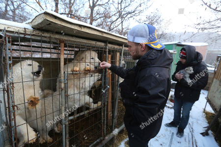 Gus Kenworthy, Matthew Wilkas. American freestyle skier Gus Kenworthy, left, and his boyfriend Matthew Wilkas watch dogs in cages at a dog meat farm in Siheung, South Korea. Kenworthy saved five stray dogs during the Sochi Olympics four years ago and is considering adopting one of the many puppies he met Friday after finishing competition the Pyeongchang Games