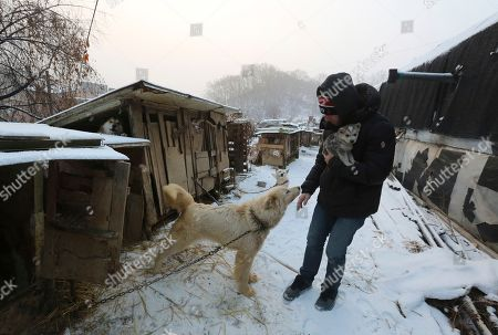 Matthew Wilkas, American freestyle skier Gus Kenworthy's boy friend, watches a dog at a dog meat farm in Siheung, South Korea. Kenworthy saved five stray dogs during the Sochi Olympics four years ago and is considering adopting one of the many puppies he met Friday after finishing competition the Pyeongchang Games