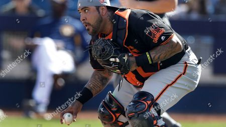 San Francisco Giants catcher Hector Sanchez picks up the loose ball during a spring training baseball game, in Maryvale, Ariz