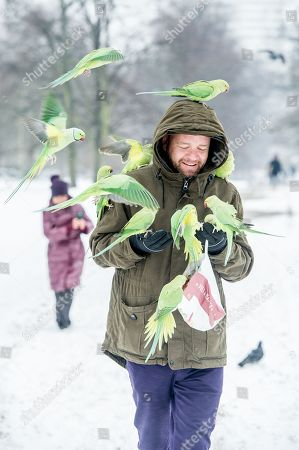 Snowy scenes in Kensington Gardens and Hyde Park as man feeds the resident Indian Ringneck Parrots