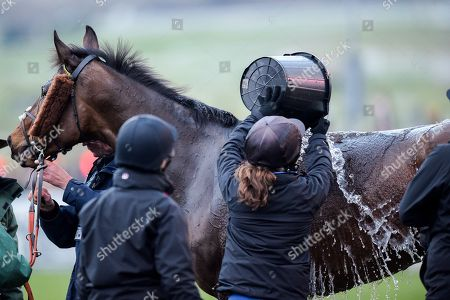 Captain Buck's trained by Paul Nicholls and ridden by Luke Williams is cooled down by the stable handlers after the 5:30pm Fulke Walwyn Kim Muir Challenge Cup Amateur Riders' Handicap Chase