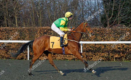 Stock Picture of ONE COOL DADDY (Jack Duern) before winning The Better Odds With Matchbook Novice Stakes Div1 Kempton