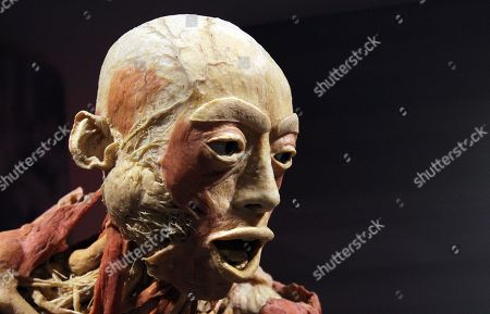 Stock Photo of Detail of a human body seen at the 'Real Bodies: The Exhibition' at Byron Kennedy Hall, Entertainment Quarter, Moore Park in Sydney, New South Wales, Australia, 12 April 2018. The exhibition consists of 11 galleries, containing 20 real human bodies and 200 real human parts.