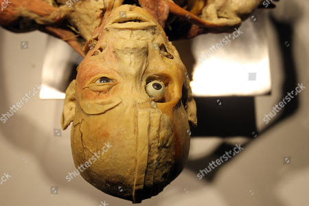 Detail of a human body seen at the 'Real Bodies: The Exhibition' at Byron Kennedy Hall, Entertainment Quarter, Moore Park in Sydney, New South Wales, Australia, 12 April 2018. The exhibition consists of 11 galleries, containing 20 real human bodies and 200 real human parts.