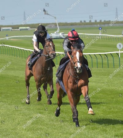 Stock Image of (R) Rajasinghe and rider Michael Hills on a gallop with a stable companion at Newmarket as preparation for The Guineas meeting in May.