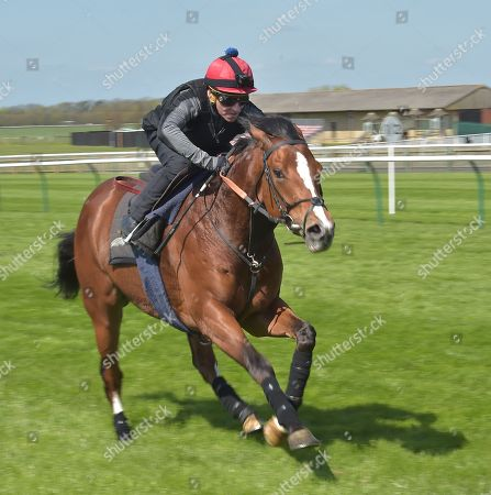 Stock Picture of Rajasinghe and rider Michael Hills on a gallop at Newmarket as preparation for The Guineas meeting in May.
